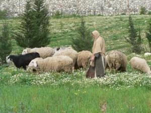 shepherdessmary