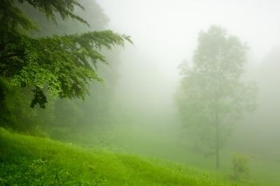 Green Mist by Evgeni Dinev